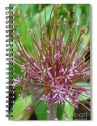 Evolving Allium Spiral Notebook