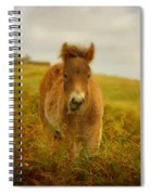 Exmoor Wild Pony Spiral Notebook