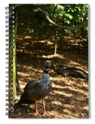Exotic Bird 2 Spiral Notebook