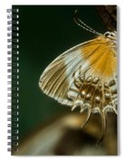 Exotic Butterfly On Tree Bark Spiral Notebook