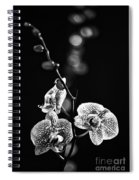 Exotic Orchid Bw Spiral Notebook