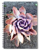 Exotic Succulent Plant - Pink Lilac Spiral Notebook