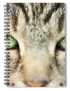 Extreme Close Up Tabby Cat Spiral Notebook