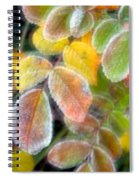 Eye Candy Spiral Notebook