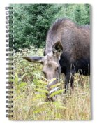 Eye-contact With The Moose Spiral Notebook