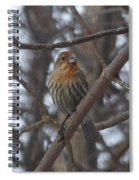 Eye-contact With The Rare - Orange Phase - House Finch Spiral Notebook