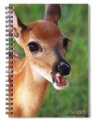 Eye Lashes Spiral Notebook