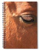Eyelashes - Horse Close Up Spiral Notebook