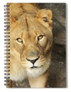 Eyes Of The Lioness Spiral Notebook