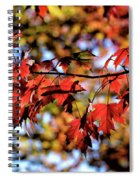 Fabulous Fall Spiral Notebook