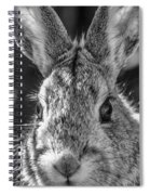 Face Of A Rabbit In Black And White Spiral Notebook