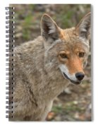 Face Of The American Coyote Spiral Notebook
