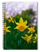 Daffodils Sky Spiral Notebook