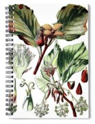 Fagus Sylvatica, The European Beech Or Common Beech Spiral Notebook