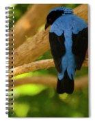 Fairy Bluebird Male Digital Oil  Spiral Notebook