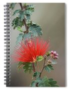 Fairy Duster-img_488917 Spiral Notebook