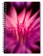 Fairy Light Spiral Notebook