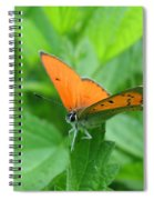 Fairy Spiral Notebook