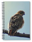 Falcon Spiral Notebook