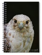 Falcon Close Up Spiral Notebook