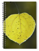 Fall Aspen Leaf Spiral Notebook