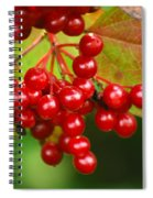Fall Berries 2 Spiral Notebook