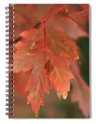 Fall Color In Softness Spiral Notebook