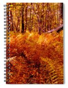 Fall Color In The Woods Spiral Notebook