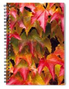 Fall Colored Ivy Spiral Notebook