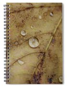 Fall Droplets Spiral Notebook
