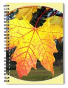 Fall Finery 2 Spiral Notebook