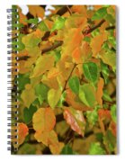 Fall Foliage II Spiral Notebook