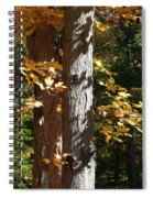 Fall Forest 4 Spiral Notebook