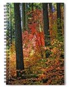 Fall Forest Splendor Spiral Notebook