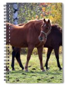 Horses Fall Grazing Spiral Notebook