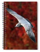 Fall Gull Spiral Notebook