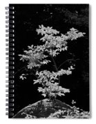 Fall Illumination In B/w Spiral Notebook