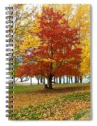 Fall In Kaloya Park 5 Spiral Notebook