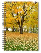 Fall In Kaloya Park 7 Spiral Notebook
