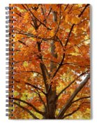 Fall In Kayloya Park 2 Spiral Notebook