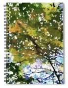 Fall In Woods Spiral Notebook
