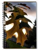 Fall Leaf Spiral Notebook