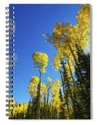 Fall Light Spiral Notebook