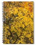 Fall Tree Leaves 2 Spiral Notebook