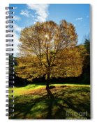 Fall Tree Silhouette Kent Falls State Park Connecticut Spiral Notebook