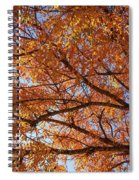 Fall Tree With Star Burst Spiral Notebook