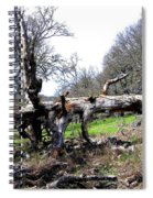 Fallen Mighty Oak Spiral Notebook