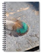 Fallen Peacock Feather Spiral Notebook