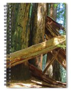 Fallen Redwood Trees Forest Spiral Notebook
