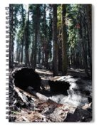 Fallen Sequoia Crescent Meadow Trail Spiral Notebook